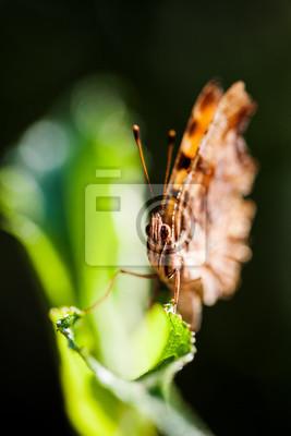Bild Macro view orange butterfly on green leaf. shallow depth field. selective focus.