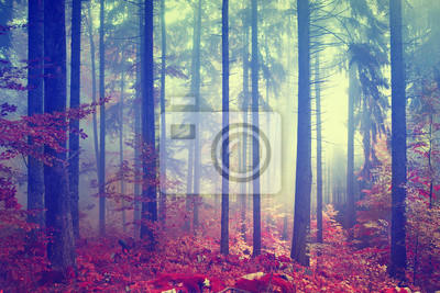 Magic Color vintage Wald