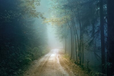 Magic Herbst Farbe nebligen Wald Straße. Scary dunkelblau grün gefärbte Landschaft Waldland.