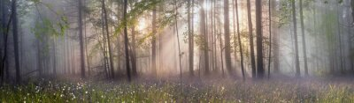 Bild Magic Karpaten Wald im Morgengrauen