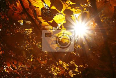 Magic sun rays through gold red colored autumn season leaves.