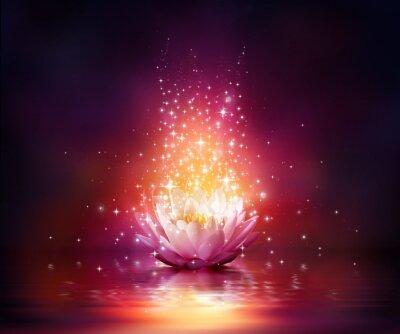 Bild Magie Blume auf dem Wasser