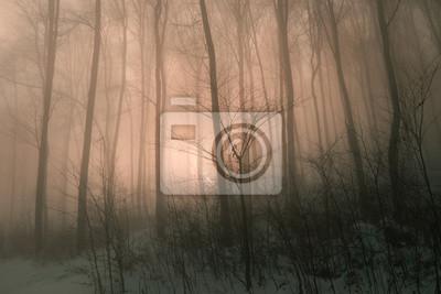 Magie nebligen Wald