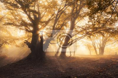 Magische alten Baum mit Sonnenstrahlen in den Morgen. Wald im Nebel. Bunte Landschaft mit nebligen Wald, Gold Sonnenlicht, gelb Laub bei Sonnenaufgang. Feenwald im Herbst. Herbstwälder. Verzauberter B
