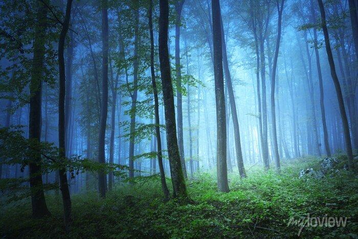 Bild Magische blaue Farbe Licht in mystischen Wald