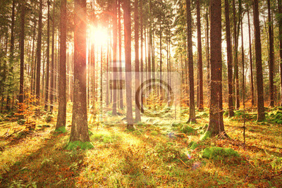 Magische bunte sonnige Herbst Jahreszeit Waldlandschaft.
