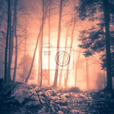 Magische orange rot gefärbte Waldboden und mit gelben roten Nebel Sonnenlicht. Mystic farbiges Licht im Wald. Schöne Bäume im Zauberwald-Landschaft. Farbfilter-Effekt verwendet.