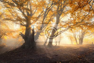 Magischer alter Wald mit Sonnenstrahlen am Morgen. Bunte Landschaft mit nebligen Wald, Gold Sonnenlicht, orange Laub bei Sonnenaufgang. Feenwald im Herbst. Fall woods.Enchanted Baum