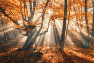 Magischer Herbstwald mit Sonnenstrahlen am Abend. Bäume im Nebel. Bunte Landschaft mit nebligen Wald, Gold Sonnenlicht, orange Laub bei Sonnenuntergang. Feenwald im Herbst. Fall woods.Enchanted Baum