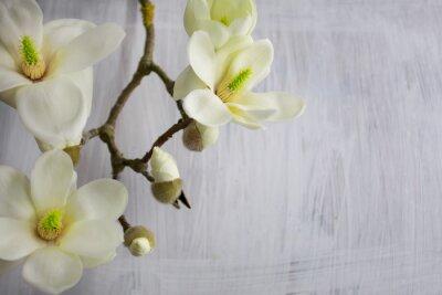 Bild Magnolia Blumen blühen