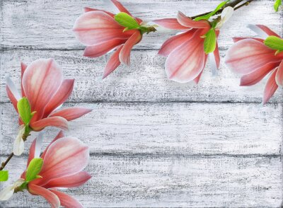 Bild Magnolienblumen auf Hintergrund der schäbigen hölzernen Planken