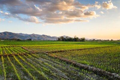 Bild Mais Bauernhof