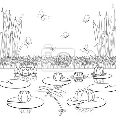 Bild Malvorlage Mit Teich Einwohner Und Pflanzen