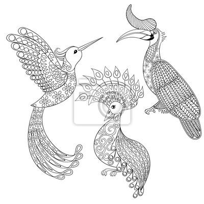 Malvorlage mit vogel-nashorn, kolibri und exotischen vogel ...