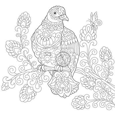 Malvorlage von taube (taube) vogel freehand skizze zeichnung ...