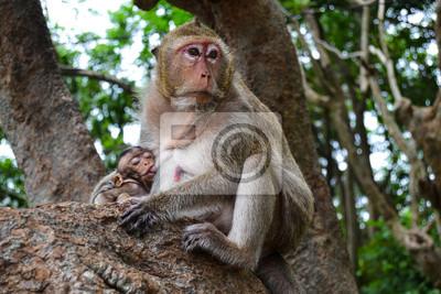 Bild Mama und Baby-Affen in Thailand