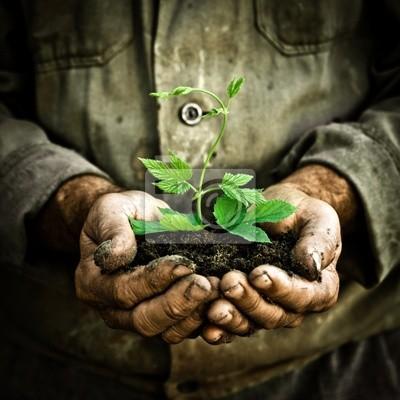 Man Hände, die eine grüne junge Pflanze