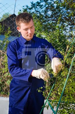 Männlich Gärtner binden Zweige