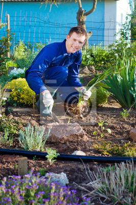 Männlich Landwirt Einpflanzen einer Iris Blume