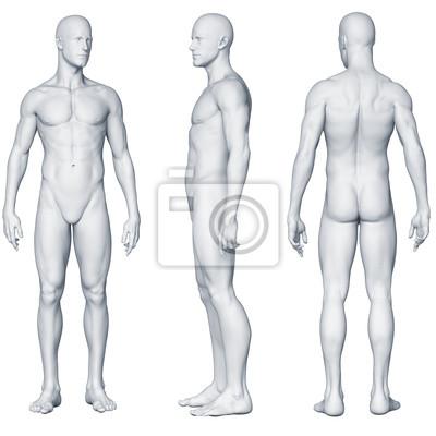 Männlicher körper - seitenansichten leinwandbilder • bilder ...