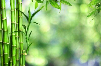 Bild Many bamboo stalks  on background
