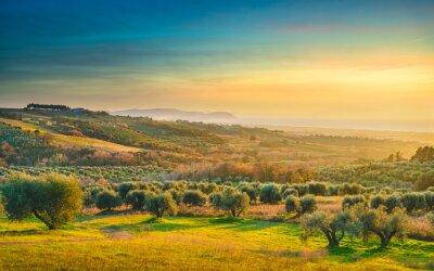 Bild Maremma sunset panorama. Countryside, sea and Elba on horizon. San Vincenzo, Tuscany, Italy.