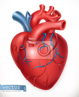 Menschenherz. medizin, innere organe. 3d-vektor-symbol ...