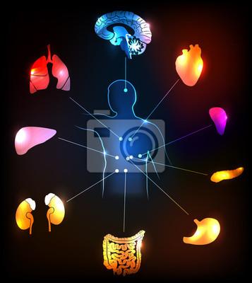 Menschliche anatomie bunt und hell medizinische konzept ...