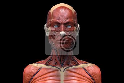 Bild Menschliche Anatomie einer Frau, Anatomie des Kopfhalses und der Brust in realistischer 3D-Rendering