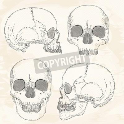 Menschliche schädel hand gezeichnet vintage skizze vektor ...
