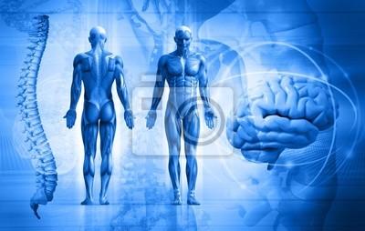 menschlichen Körper