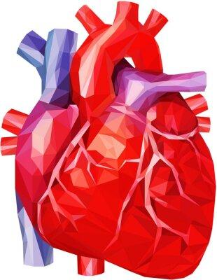 Menschliches herz in niedrigem poly leinwandbilder • bilder Aorta ...