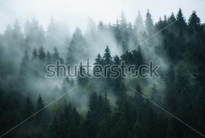 Bild Misty landscape with fir forest in hipster vintage retro style