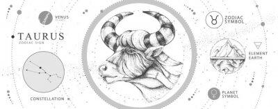 Bild Modern magic witchcraft card with astrology Taurus zodiac sign. Realistic hand drawing bull head. Zodiac characteristic