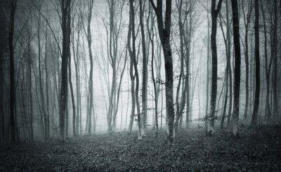 Bild Monochrome Schwarz-Weiß-Grunge texturierte Farbe nebelig mystischen Wald Bäume Landschaft.