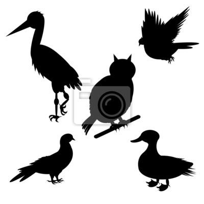 Monochrome Silhouetten verschiedener Vogelarten