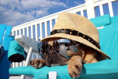 Bild Mops Entspannen im Strandkorb