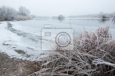 Morgen Frost auf dem Schilf in der Nähe des Flusses