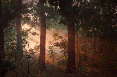 Bild Morgen Nebel im Wald
