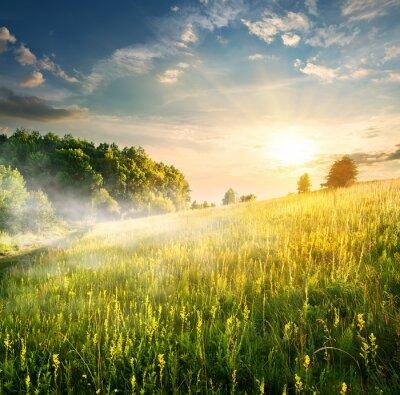 Bild Morgen über blühenden Feld
