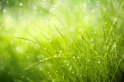 Bild Morning dew on spring grass