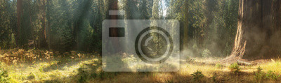 Bild Morning in Sequoia National Park, USA