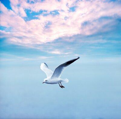 Bild Möve gegen einen Himmel Wolken