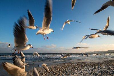 Bild Möwen im Flug Ostseeküste Binz Deutschland