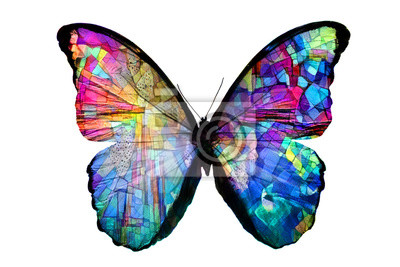 Bild multicolored butterfly isolated on white background