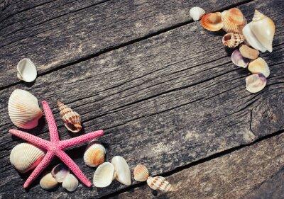 Bild Muscheln auf Holzuntergrund
