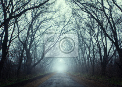 Mysterious autumn forest in fog