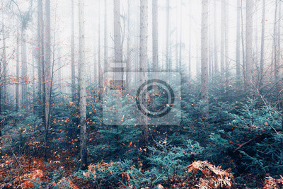 Mystic artistic bright foggy forest trees landscape.