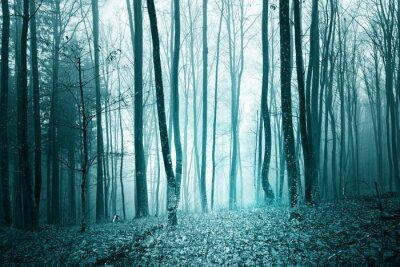 Mystic türkisblau Farbe Licht nebligen Wald Landschaft Hintergrund.