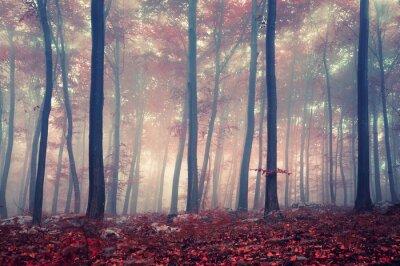 Mystic Wald